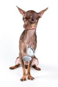 dog_pocket_watch